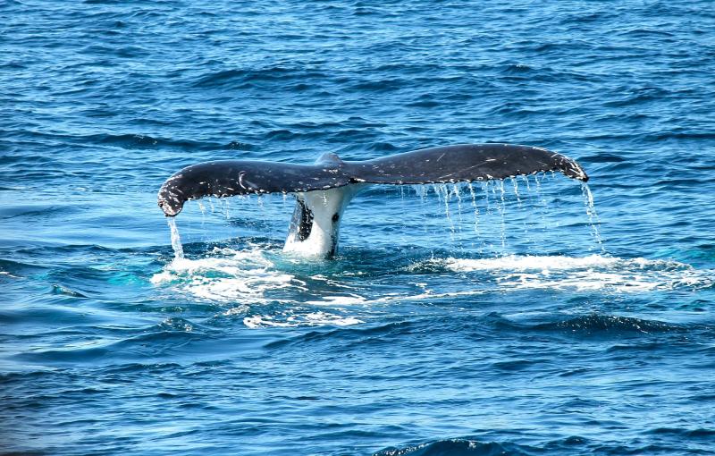 Whale-367233_1920